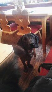 Dog at Ederstub'n